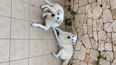 Regalo 2 cani incrocio