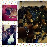 8 cuccioli novembrini