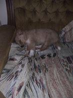 Cerco cucciolo maschio o femmina taglia piccola