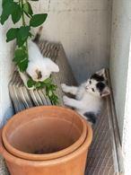Regaliamo bellissimi gattini