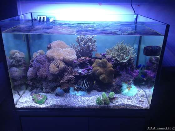 pesci acquario dolce resistenti pesci acquari allevamento pesci allevamenti pesci