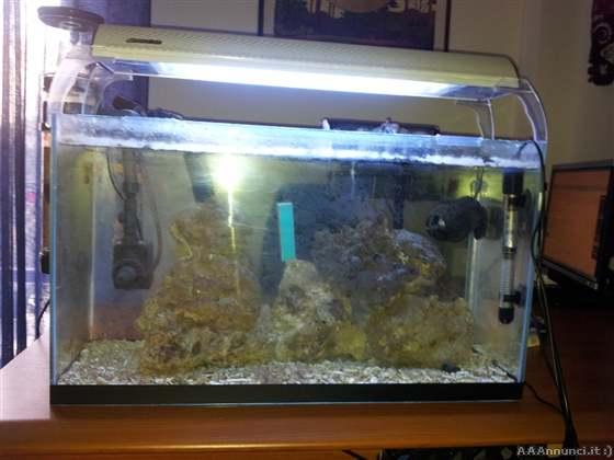 Pesci acquari allevamento pesci allevamenti pesci for Acquario marino 100 litri prezzo