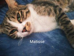 Matisse ha circa 6 mesi si affida