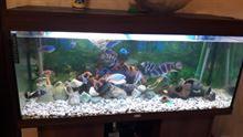 Aquario completo di pesci
