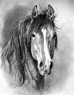 Cavallo bravo in fida