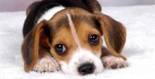 Dogsitter - disponibilità pomeriggio
