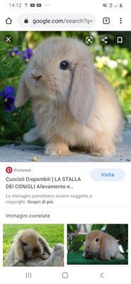 Cerco coniglietto in regalo a marina di Carrara