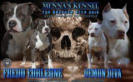 Cucciola di American Pit bull terrier con pedigree