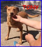 TONY dolce e solare affamato di coccole che non ha mai avuto
