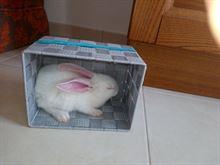 Conigli - Coniglietti bianchi domestici alimentazione