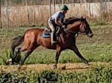 Cavallo PSI 5 anni