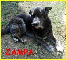 Zampa adozione d'amore nonnino lupacchiotto 10 anni