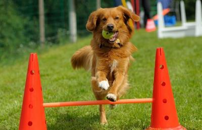 Corso addestramento cani