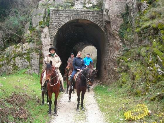 Cavalli cavalli corse accessori cavali abbigliamento for Cavalli in vendita in trentino