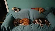 Exvolontaria Ospita I Vostri Amici Animali