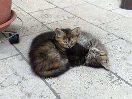 Regalo cuccioli di gattini