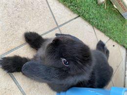 Coppia di conigli allevati in casa