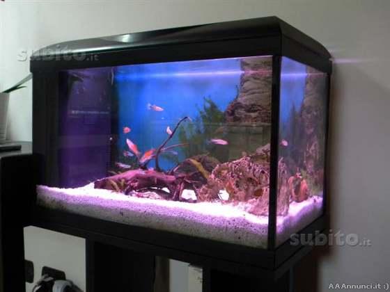 Annunci roma pesci acquari allevamento pesci for Acquario 60 litri prezzo
