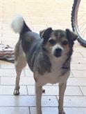 Regalo cagnolina di 12 anni
