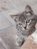 4 gattini e i loro genitori cercano casa