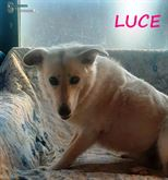 Luce in cerca d'amore