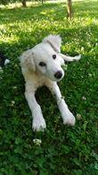 Cucciolo - 3-4 mesi