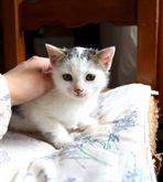 Gattina Dolcissima