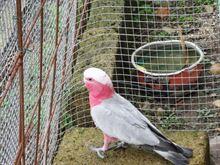 Vendita pappagallo