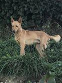 Argo Cucciolone in canile