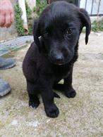 Odette: splendida cucciola futura taglia media