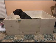 Cassa parto cane Nuovo