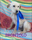 Brontolo cucciolo 6 mesi taglia grande cerca casa
